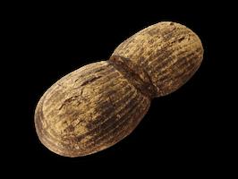 Harzer Brot