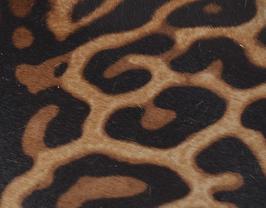 Coupon de cuir de veau guépard à poils