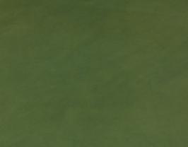 Morceau de cuir d'agneau vert fougères