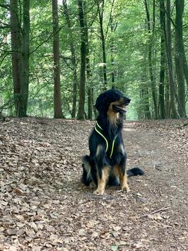 Dogs FunRun Standard ohne Brustring