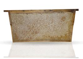 ♥ BIO-WABENHONIG komplett mit Rähmchen direkt von der Biene (Wildausbau) nur für kurze Zeit! ♥