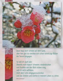 Große Postkarte: Schnee auf Blüte - mich dem Licht entgegenstrecken