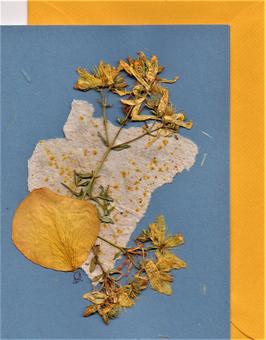 "3er Set Blüten-Faltkarten ""tricolor"" BSP15"