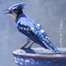 No. 337 - Blue Jay