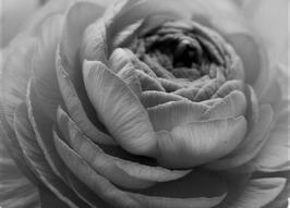 Losse Ansichtkaart Black&White 5