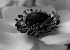 Losse Ansichtkaart Black&White 1