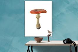 Amanita muscaria, lamella