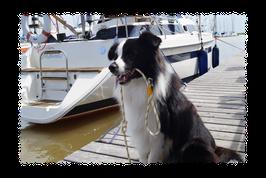 Maritime Hundeleine aus Segeltauwerk