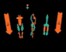 """- Hier mit Paypal oder per Überweisung zahlen - Online Kurs """"Bessere Körperhaltung für ein Leben ohne Rückenschmerzen"""" von Peter Scholten"""