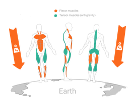 """Online Kurs """"Bessere Körperhaltung für ein Leben ohne Rückenschmerzen"""""""