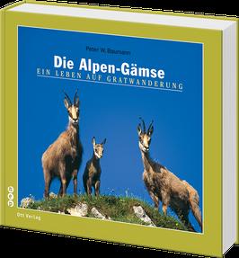 Die Alpen-Gämse