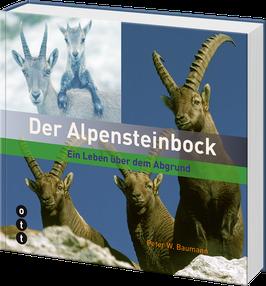 Der Alpensteinbock