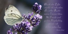 """"""" Träume leben... """" Motiv Schmetterling im Lavendel Text von Christian Scharf"""