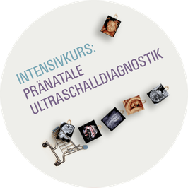 INTENSIVKURS PRÄNATALE ULTRASCHALLDIAGNOSTIK
