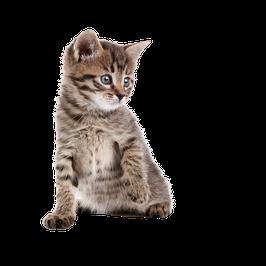 25 deutsche Artikel, Thema: Katzen 1