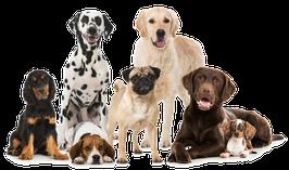 34 deutsche Artikel zum Thema: Hunde