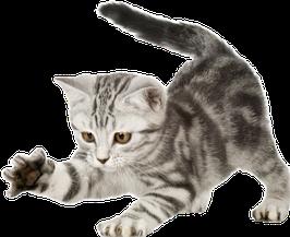 33 Deutsche Artikel, Thema: Katzen 2