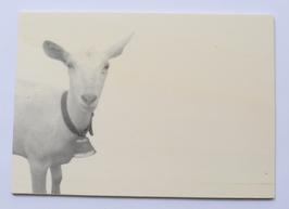 Holzpostkarte Ziege 002