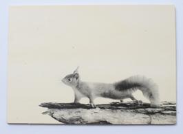 Holzpostkarte Eichhörnchen 001