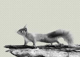 Postkarte Tapete Eichhörnchen 2017017