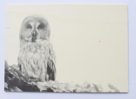 Holzpostkarte Eule 163