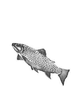 Geschirrtuch mit Siebdruck Fisch1 20192020