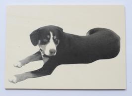 Holzpostkarte Hund 013