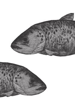 Geschirrtuch mit Siebdruck Fisch2 20192121