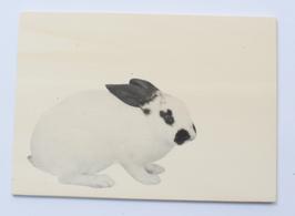 Holzpostkarte Kaninchen 009