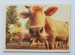 Holzpostkarte Kühe 024