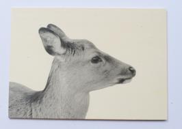 Holzpostkarte Reh 006