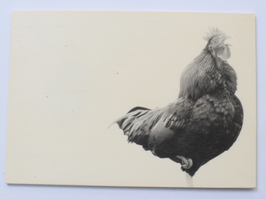 Holzpostkarte Hahn 005