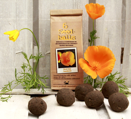 "Seedballs ""Good Day Sunshine"""