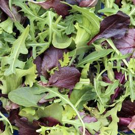 Mesclun - Junger Salat-Mix