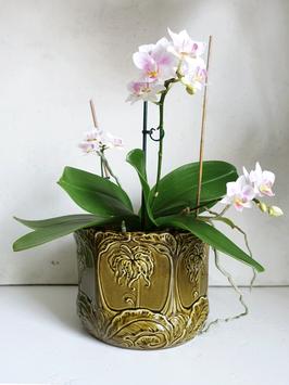 Antiker Jugendstil Cachepot Blumen Übertopf olivgrün Majolika