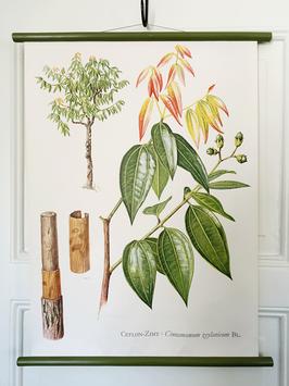 Vintage Rollkarte Schulwandkarte CEYLON ZIMT Serie Pflanzen