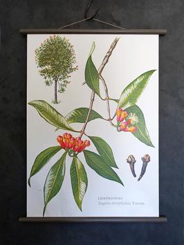 Vintage Rollkarte Schulwandkarte GEWÜRZNELKE Serie Pflanzen