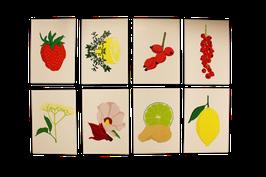 Haltbarmacherei Postkarten-Set
