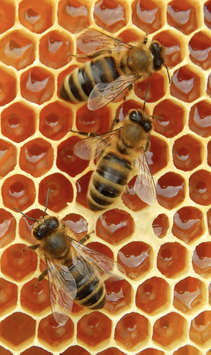 Ihr Bienenstock in Togo
