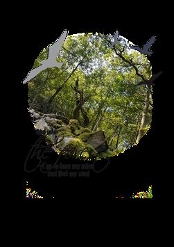 Design 4 Forest