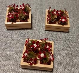 EF013 Blumenladenset Steigerl 2,5x3cm mit 4 Kaktustöpfchen fixiert