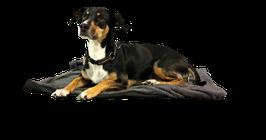 Comforter S - die erste Heizdecke für Haustiere