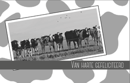 K1 - Koeien in de wei (zwart/wit)