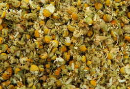 Kamille - Matricaria Chamomilla