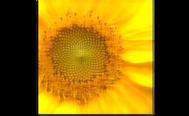 Flower 38
