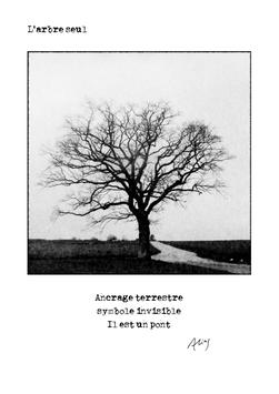 Carte - L'arbre seul