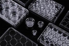 Transparenter PET-Membran Zellkultur Einsatz, Unbehandelt, 100mm Dish, Volumen 13ml