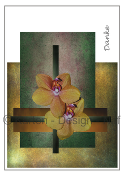 Orchideen Quer