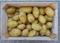 pomme de terre moyenne (diamètre 35/55mm)