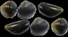 Behr Trendex Mini Carp Shells